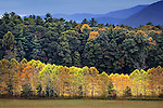Trees changing color in Smoky Mountain National Park, TN