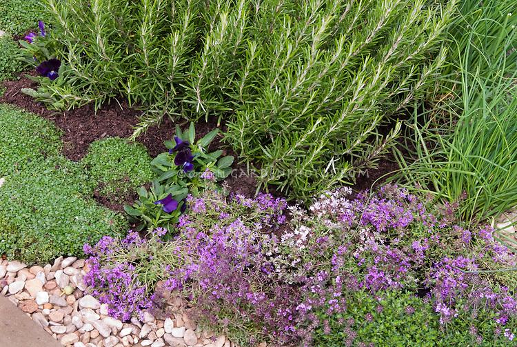 Herbs growing: rosemary, thymes in bloom