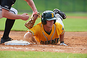 Siena Saints left fielder Chris Davignon (15) during a game against the Pittsburgh Panthers on February 24, 2017 at Historic Dodgertown in Vero Beach, Florida.  Pittsburgh defeated Siena 8-2.  (Mike Janes/Four Seam Images)