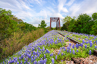 Bluebonnets Along the Track - This old abandoned rail road track with bluebonnets is something we have taken a few times over the years.  We had stop coming here because it has gotten so trampled in the past few years, but I guess since the corona 19 virus people didn't come like before. So we packed up before sunrise and headed out into the Texas hill country to try for a sunrise capture along the tracks.  After the sunrise I was able to capture some shots early in the morning before the sky got harsh of the bluebonnets line up beside and on top of the tracks. Always a good day when you can catch some texas bluebonnets especially along a railroad track in the Texas hill country..