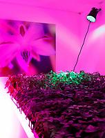 Nederland Amsterdam - Januari 2019.  HORECAVA.  Citroenbasilicum bij de stand van Seven Steps To Heaven uit Eindhoven. Heaven Fine Botanical Art. Heaven biedt oplossingen voor de traditionele tuinbouw. De planten worden binnen zonder pesticiden gekweekt. Er wordt 90% water bespaard ten opzichte van traditionele tuinbouw. Foto Berlinda van Dam / Hollandse Hoogte