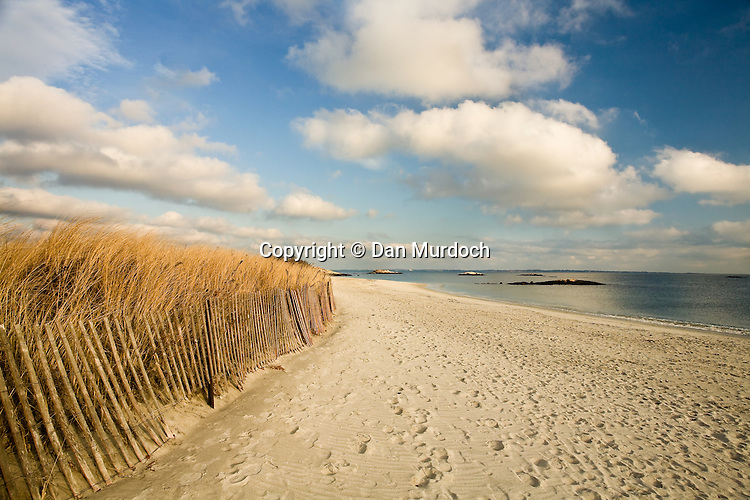 Cordgrass on sand dune behind fence on Waterford, CT beach.