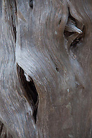 Tree Detail, Gossip Island, San Juan Islands, Washington, US