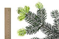 Nordmann-Tanne, Nordmanntanne, Nordmannstanne, Nordmanns-Tanne, Kaukasus-Tanne, Kaukasustanne, Nordmanns Tanne, Abies nordmanniana, Nordmann Fir, Caucasian Fir, Christmas Tree, Le sapin de Nordmann, sapin du Caucase, sapin de Crimée. Blatt, Blätter, leaf, leaves