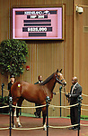 September 09, 2014: Hip #306 Tiznow - Supercharger colt consigned by Hill 'n' Dale Sales sold for $525,000 to Calumet Farm at the Keeneland September Yearling Sale.   Candice Chavez/ESW/CSM