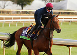 Circus Maximus, trained by trainer Aidan P. O'Brien, exercises in preparation for the Breeders' Cup Mile Keeneland Racetrack in Lexington, Kentucky on November 5, 2020.