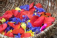 Essbare Blüten in einem Korb, Kräuterernte, Blütenblätter, Blütenernte, Blüten. Kornblume, Korn-Blume, Zyane, Cyanus segetum, Centaurea cyanus, Cornflower, Bachelor´s Button, Le Bleuet, le Centaurée bleuet. Nachtkerze, Nachtkerzen-Blüten, Gewöhnliche Nachtkerze, Oenothera biennis, Common Evening Primrose, Evening-Primrose, Onagre. Klatsch-Mohn, Klatschmohn, Mohnblume, Klatschrose, Mohn, Papaver rhoeas, Corn Poppy, Field Poppy, common poppy, corn rose, Flanders poppy, red poppy, Le coquelicot