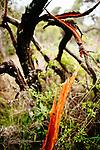 Image Ref: CA942<br /> Location: Bushrangers Bay Track<br /> Date of Shot: 07.09.19
