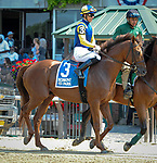 July 5, 2021: Sadler's Joy, ridden by Jose Ortiz, in the post parade prior to the 2021 running of the Grand Couturier S. at Belmont Park in Elmont, NY. Sophie Shore/ESW/CSM