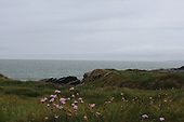 Wild Flowers by the Sea