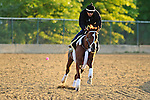 138th Kentucky Derby Winner I'll Have Another works out in preps for the 137th Preakness at Pimlico Race Course in Baltimore, MD on 05/16/12. (Ryan Lasek/ Eclipse Sportswire)