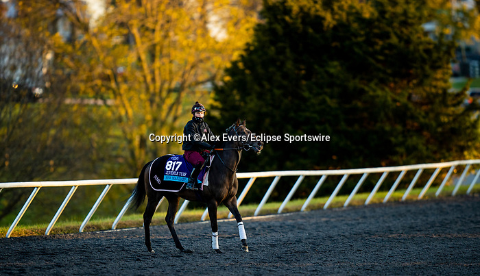 November 3, 2020: New Mandate, trained by trainer Ralph M. Beckett, exercises in preparation for the Breeders' Cup Juvenile Turf at Keeneland Racetrack in Lexington, Kentucky on November 3, 2020. Alex Evers/Eclipse Sportswire/Breeders Cup