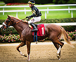 ELMONT, NY - OCTOBER 08: American Deluxe #1, ridden by Antonio A. Gallardo, after the Michael J. Barosa Memorial Race, on Jockey Club Gold Cup Day at Belmont Park on October 8, 2016 in Elmont, New York. (Photo by Douglas DeFelice/Eclipse Sportswire/Getty Images)