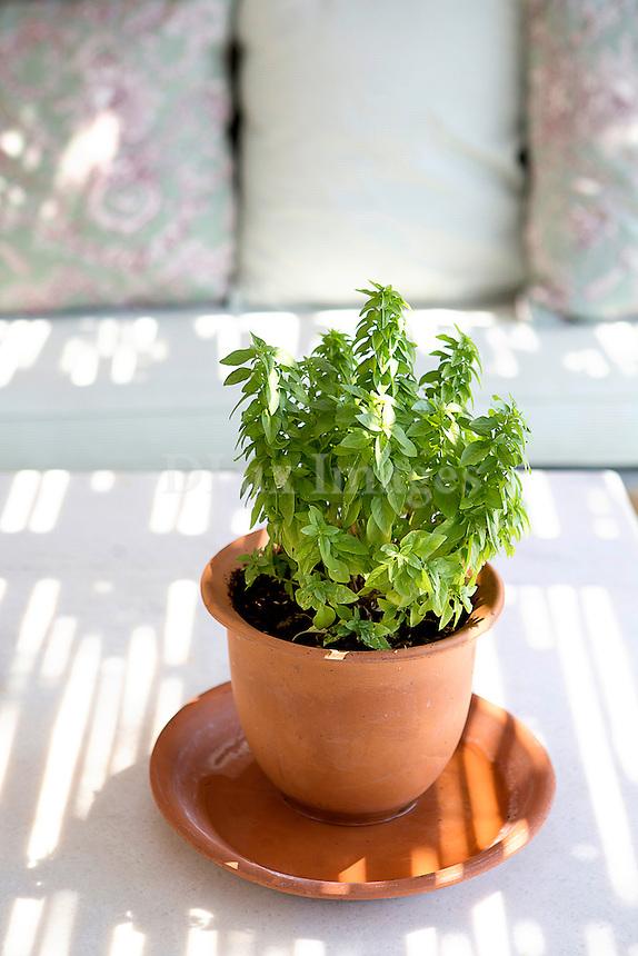 Terracotta flowerpot