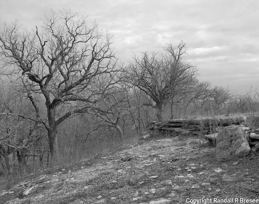 """""""Pancake Rocks and Oak Trees"""" <br /> Konza Prairie Biological Station, Kansas<br /> <br /> The Konza Prairie Biological Station in the Flint Hills of northeastern Kansas provides a place to preserve and research various facets of the prairie ecosystem. This photograph shows a common rock formation called """"pancake rocks"""" and beautiful, old oak trees."""