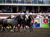 Horse Stock in Arena at Calgary Stampede, Calgary, Alberta, Canada - Editorial Use Only