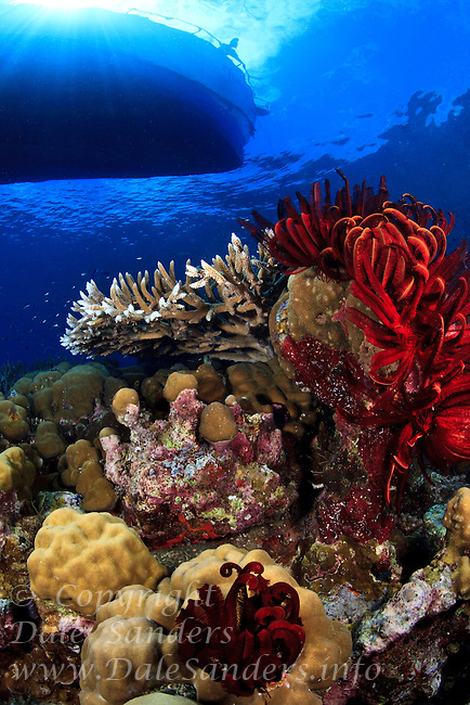 A boat floats above a pristine coral reef in Kimbe Bay off New Britain Island, Papua New Guinea.