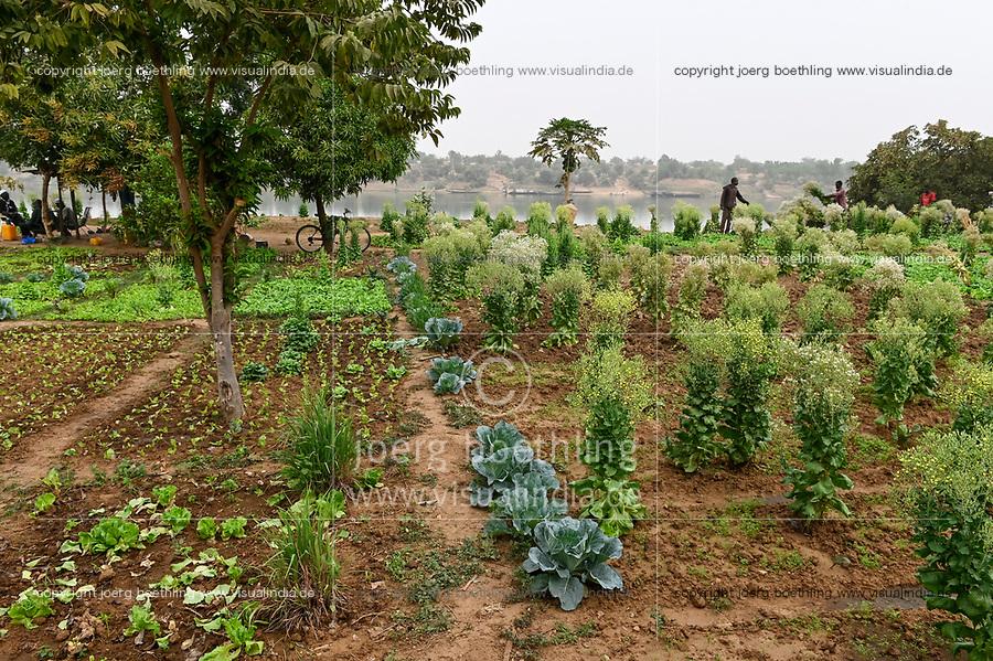 MALI, Kayes, Senegal river, irrigated vegetable fields / Senegal Fluss, Gemüseanbau durch Bewässerung
