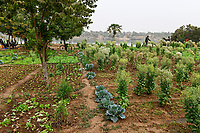 MALI, Kayes, Senegal river, irrigated vegetable fields / Senegal Fluss, Gemüseanbau durch Bewässerung