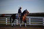 November 2, 2020: Ce Ce, trained by trainer Michael W. McCarthy, exercises in preparation for the Breeders' Cup Distaff at Keeneland Racetrack in Lexington, Kentucky on November 2, 2020. Alex Evers/Eclipse Sportswire/Breeders Cup