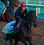 October 29, 2014:  Trade Storm, trained by David Simcock, exercises in preparation for the Breeders' Cup Mile at Santa Anita Race Course in Arcadia, California on October 29, 2014. Scott Serio/ESW/CSM