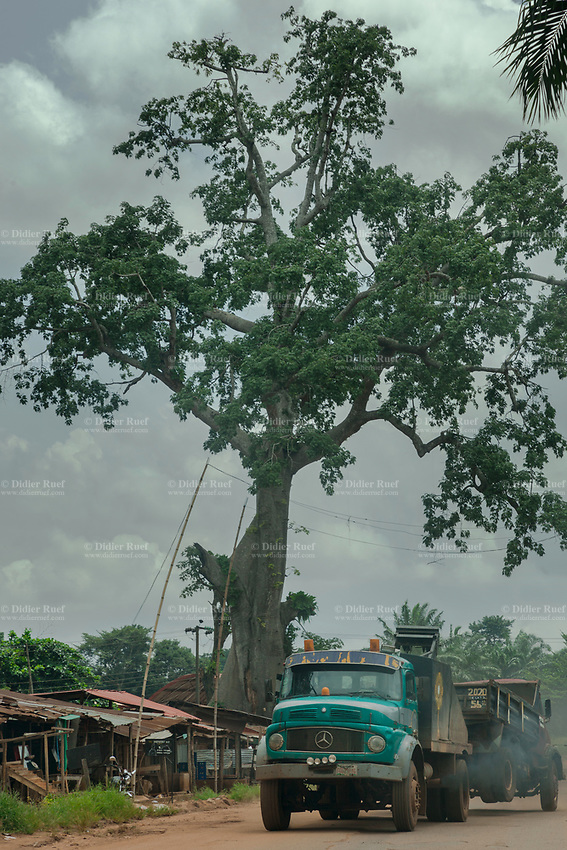 Nigeria. Enugu State. Awhun. A Mercedes truck is towing a broken down truck. Giant tall tree on the side of the dirt road. 29.06.19 © 2019 Didier Ruef