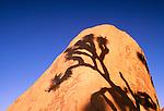 Shadow of a joshua tree on a boulder, Joshua Tree National Park, California, USA