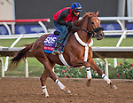 DEL MAR, CA - OCTOBER 27: Mind Your Biscuits, owned by J Stables, Head of Plains Partners LLC, All American Horses LLC, Daniel Summers & Michael E. Kisper and trained by Chad Summers, exercises in preparation for TwinSpires Breeders' Cup Sprint at Del Mar Thoroughbred Club on October 27, 2017 in Del Mar, California. (Photo by Scott Serio/Eclipse Sportswire/Breeders Cup)