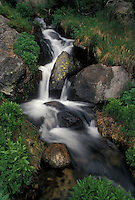 river, Rocky Mts., CO, Colorado, Mountain stream flows over rocks in Rocky Mountain National Park.