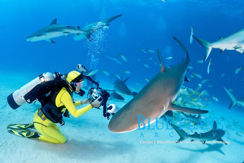 Caribbean Reef Sharks, Carcharhinus pereziii, with female scuba diver, photographer, Bahamas, Caribbean, Atlantic