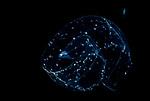 Larval eel; False moray, Chlopsidae sp. (Kaupichthys hyoproroides etc.). ID by 小嶋純一Junichi KOJIMA, from Japan, shot in Anilao   6-10-19-9306 Leptocephalus