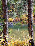 Fly fishing on the Blackfoot River in autumn near Missoula, Montana