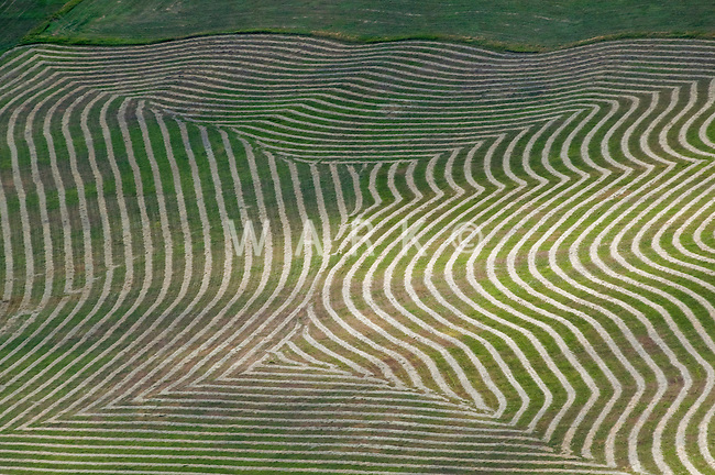 pattern in field