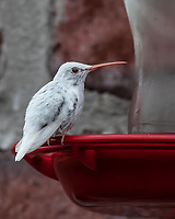 RARE BIRD<br />