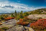 Fall foliage on Cadillac Mountain in Acadia National Park, Maine, USA