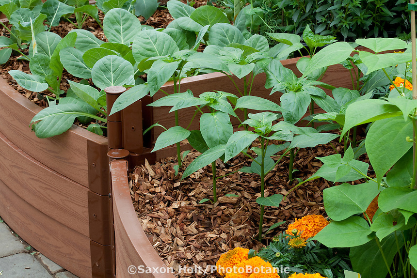 Intensive planted and mulched diy raised bed of vegetables with young pepper plants