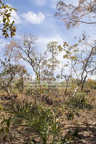 Mato Grosso, Brazil. Typical cerrados vegatation.