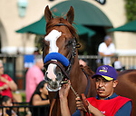 DEL MAR, CA August 25: Catalina Cruiser before winning the Grade II Pat O'Brien Stakes at Del Mar on August 25, 2018 in Del Mar, California (Photo by Chris Crestik/Eclipse Sportswire)