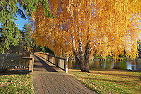 Bridge path crossing Deschutes River at Drake Park with fall aspen. Bend. Central Oregon