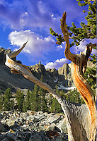 Close up of Bristlecone Pine and Wheeler Peak. Great Basin National Park, Nevada (This images has had a sky added)