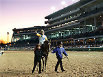 Nov.4, 2011.Perfect Shirl ridden by Jon Velazquez trained by Roger L. Attfield heading for the winners circle after winning the Emirates Airline Breeders' Cup Filly & Mare Turf at Churchill Downs, Louisville, KY