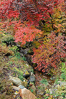 Asticou Gardens in autumn, Northeast Harbor, Mount Desert Island, Maine, USA