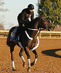 Wet Your Whistle, trained by trainer Michael J. Trombetta, exercises in preparation for the Breeders' Cup Turf Sprint at Keeneland Racetrack in Lexington, Kentucky on November 4, 2020.