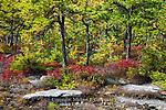 The Nature Conservancy Preserve on Moosic Mountain,  Lackawanna County, Pennsylvania