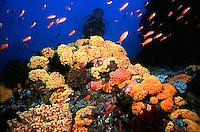 Marine Environment, Reef