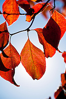 Fall Leaves Autumn Color Details in Nature