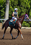 September 06 2014: Kentucky Derby winner, California Chrome works out with rider Victor Espinoza  in 1:10 for 6 Furlongs at Los Alamitos Race Track in Cypress CA. Alex Evers/ESW/CSM
