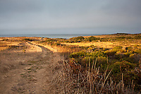 The South Whitehouse Creek Trail at California's Ano Nuevo State Reserve at sunrise.