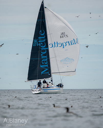 The Half Tonner Mata (Wright brothers & Rick DeNeve). If you want to do well in the Lambay Race, exclude all marine ornithologists from your crew, as their concentration will al most immediately be elsewhere. Photo: Annraoi Blaney