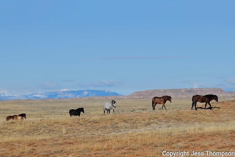Wild Horses, McCullough Peaks, Cody